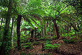 Australia_239_Blue_Mountains_National_Park.jpg, 30kB