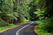 Australia_241_Blue_Mountains_National_Park.jpg, 27kB