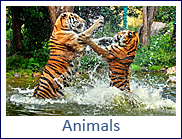 animals.png, 58kB