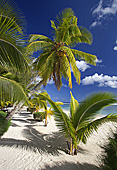cookislands304.jpg, 19kB
