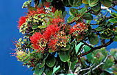 Hawaii, Flower, Photo Nr.: haw015