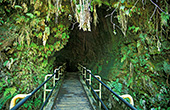 haw126_Big_Island_Thurston_Lava_Tube.jpg, 24kB