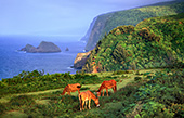 haw177_Big_Island_Pololu_Valley_Lookout.jpg, 18kB