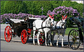 Vienna, Pferdekutsche (Horse-drawn Carriage) at Square Heldenplatz, Photo Nr.: W2337
