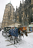 Vienna, Stephansplatz, Photo Nr.: W5444