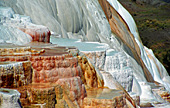 Yellowstone National Park, Mammoth Hot Spring, Photo Nr.: y127
