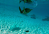 Tahiti266 - Rangiroa urlaub ...