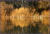 Austria, Lobau, National Park Donau-Auen, Photo Nr.: W1245