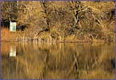 Austria, Lobau, National Park Donau-Auen, Photo Nr.: W1246