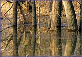 Austria, Lobau, National Park Donau-Auen, Photo Nr.: W1247