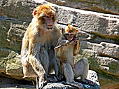 Vienna, Zoo, Photo Nr.: W4659