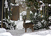 Vienna, Zentralfriedhof (Central Cemetery), Photo Nr.: W5411